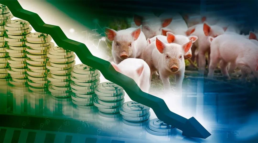 深度:猪价上涨还要多久?注意!生猪均重已破历史高点!