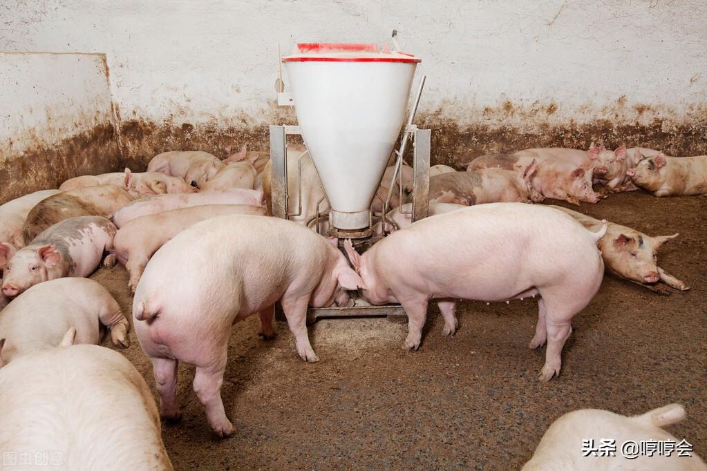 非瘟变异株病毒来袭,猪场防控思路应该如何调整?