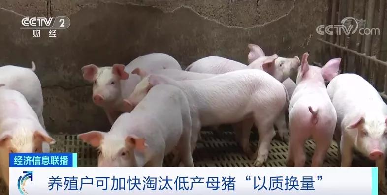 生猪产业极度低迷亏损严重,养殖主体怎么办?官方给出猪场下步发展建议