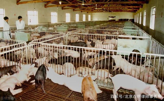 """连跌8个月,国内猪肉价格大有雪崩之势!""""吃肉""""终于自由,养殖户何去何从?"""