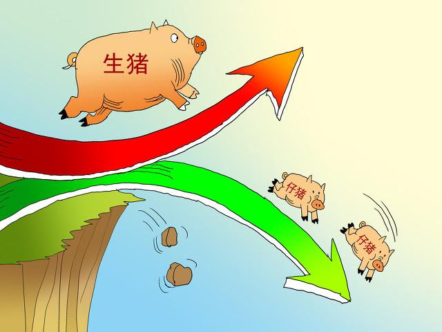 面临猪价五连涨,全面破8元,新一轮涨价潮或将来袭,消费者要准备好啦