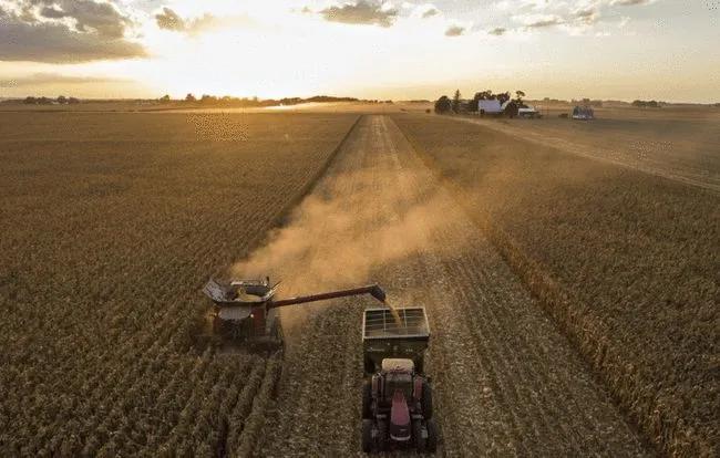 中国今年玉米进口量有望创历史新高,饲料价格上涨促进替代品需求