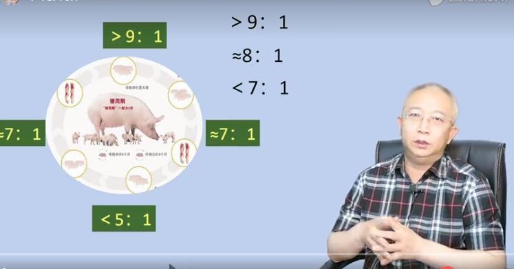 图解猪周期,如何在猪周期期间赚钱?猪周期暴利期能否果断出手?