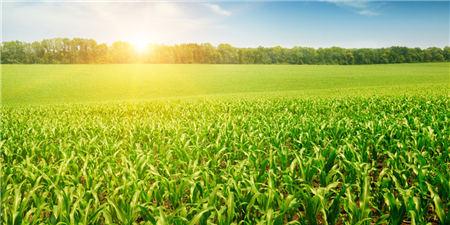 若免征关税则进口玉米每吨成本不足2000元,正常进口玉米价格是2700元/吨!