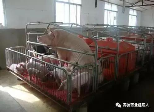 当年的《猪生产学》试卷,你能得几分?快来测一测吧!快速提升养猪知识!