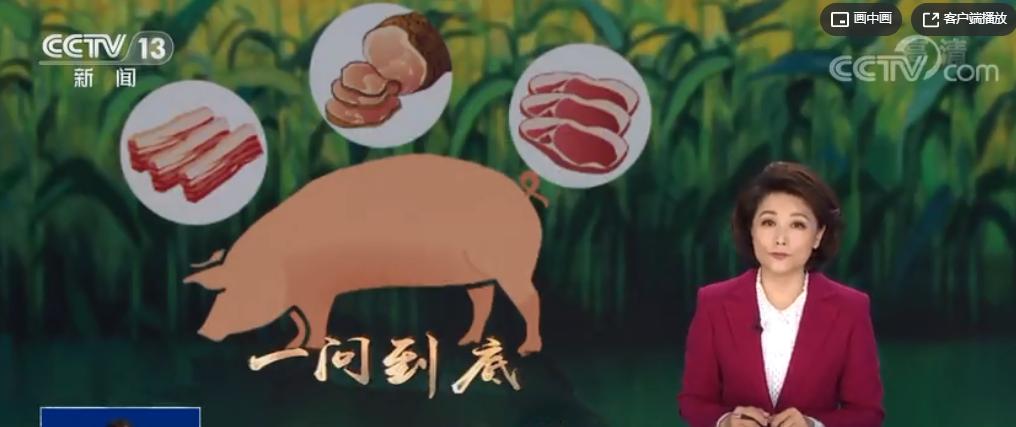 生猪价格预警机制是如何设定的?又是如何稳价格的?快来了解一下