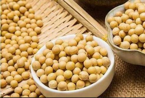 国内市场玉米跌势何时止? 国际市场玉米大豆上涨!国内外市场会互相影响吗?