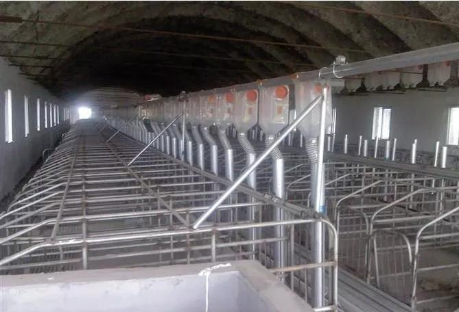 在猪场应用强力泡沫清洁剂有什么效果?