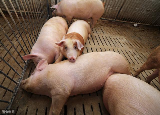 一个猪场入口改造方案,让你的猪场远离猪病!