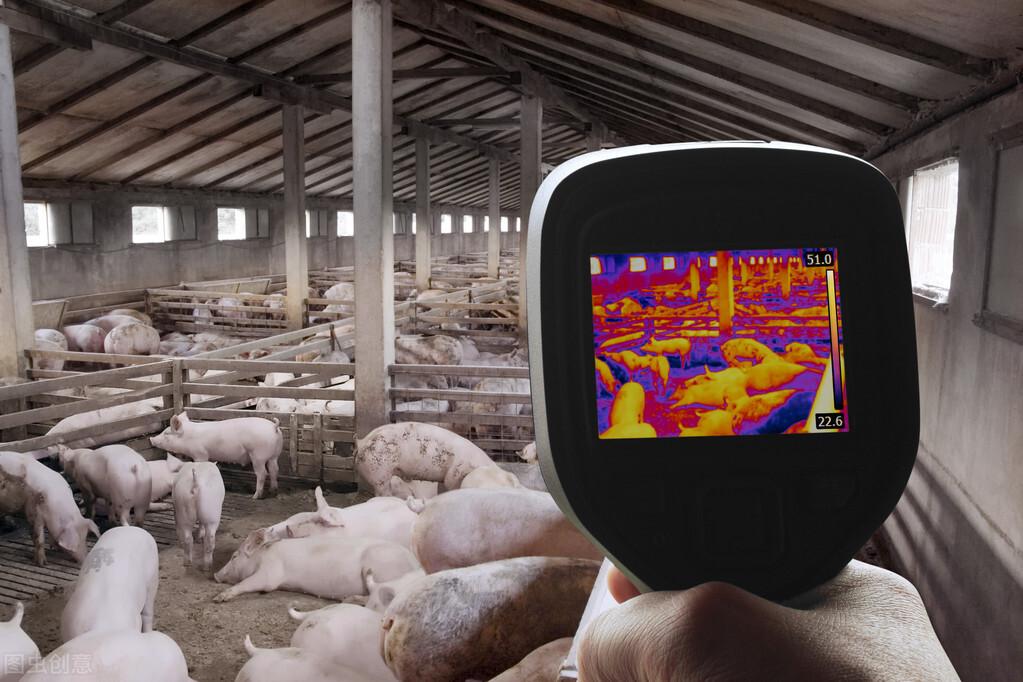 养猪业的智能养殖理念,包括传感和监测技术......