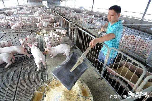 """面对猪价反弹,牧原、新希望、正邦、天邦、大北农等表示仍需""""降本增效"""",已成为生猪养殖企业核心逻辑!"""