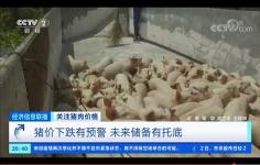 关注猪肉价格!大体重猪集中出栏,猪价波动加剧