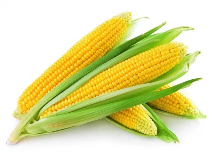 6月份已经过去,玉米的价格一直低迷不前,7月玉米的走势又会如何?后续玉米价格能否迎来转机?