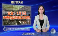 官宣!7月7日中央启动收储2万吨!猪价上涨有望?
