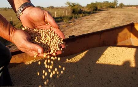 2021年度美国大豆种植面积及季度大豆库存报告!种植意向面积为8760万英亩