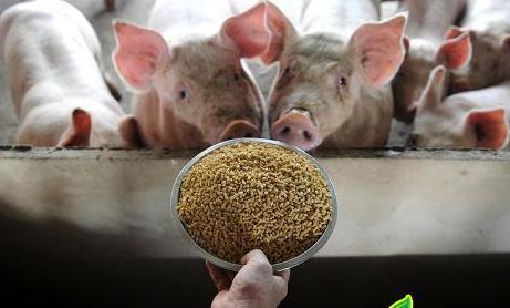 饲料营养:发酵蛋白饲料对生长育肥猪生产性能和猪肉品质的影响!