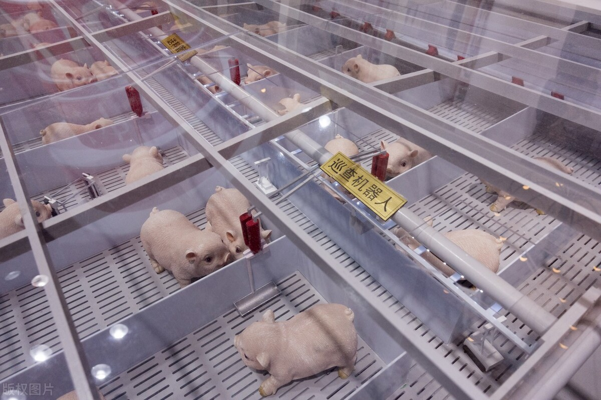 猪价连续22周回落,已跌破养殖成本线!牧原股份:四季度商品猪成本有望降至14元/公斤左右