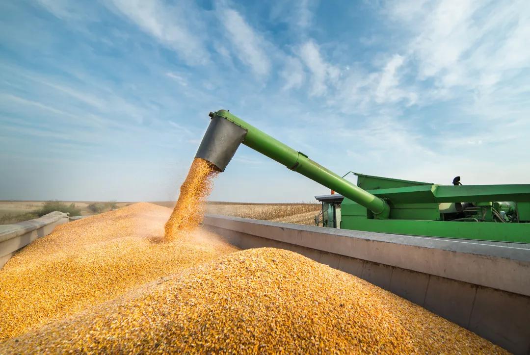 玉米和豆粕的替代成为必然,这里我们对市场玉米主流替代方案分析(上)