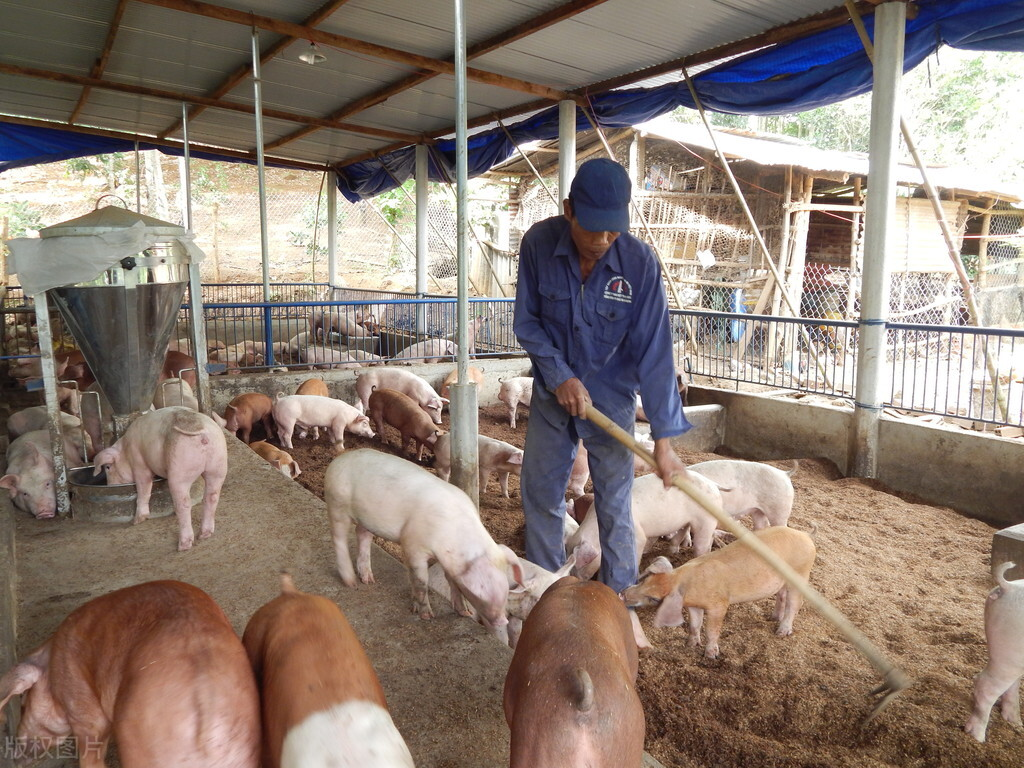 2万吨储备肉,3000吨流拍,说明猪价又要上涨了?