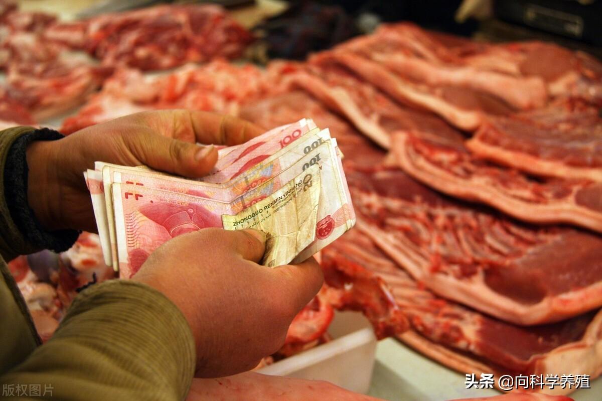 2021年7月9日全国生猪价格呈现稳涨,猪肉价格又重返20元/斤!未来还会持续上涨吗?