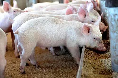为扩大养猪业务,天邦股份竟拟转让饲料业务!饲料业务不赚钱了吗? 还是有别的原因?