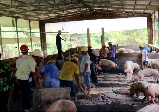 存在污染,限期整改拒不执行的猪场