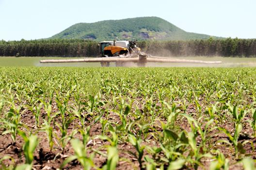 玉米价格持续下跌,中储粮进口玉米拍卖加码,国产玉米将继续承压!