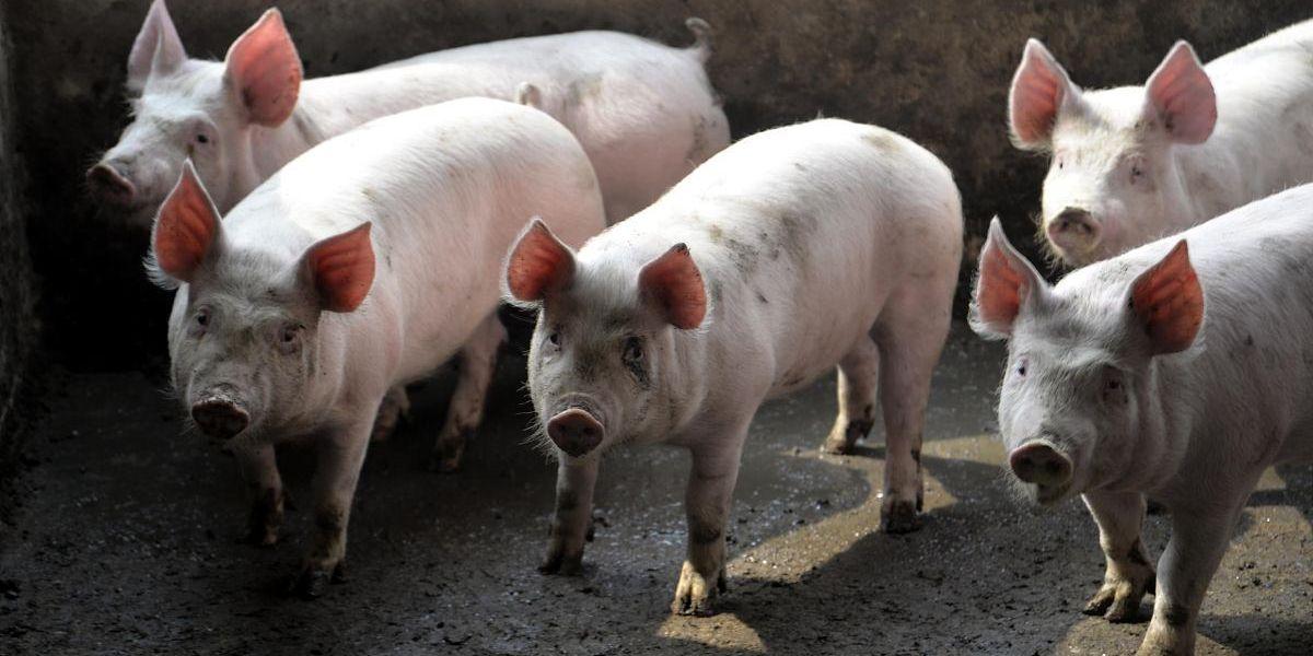 """猪市:""""一级预警""""调整""""二级预警"""",市场释放出哪些信号?"""