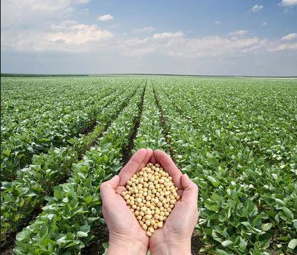 重磅!262.4公斤!江西大豆产量突破南方高产大关!创造了有记录以来江西省春大豆实收产量的新纪录!