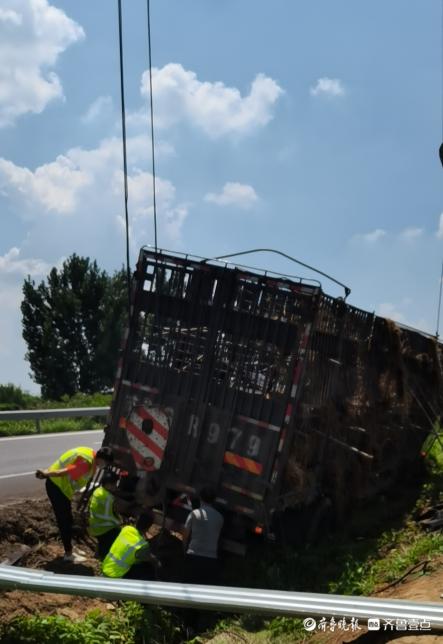 拒绝疲劳驾驶!高速泰安段司机疲劳驾驶,载有103头黑猪的大货车撞护栏