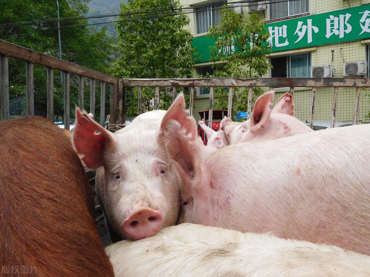 针对长时间降价的猪肉价格,在年底有可能回涨吗?别急,官方回应来了