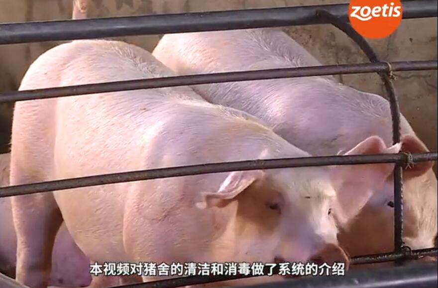 """与""""非""""共舞3年,防控重点仍在生物安全之猪舍清洁消毒!"""