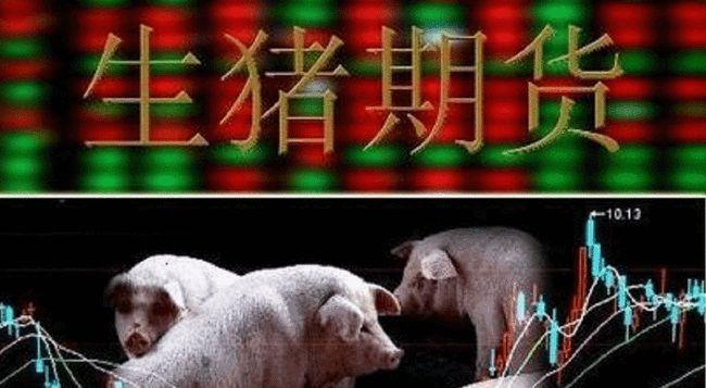 12家生猪养殖上市公司计划利用期货市场辅助经营,70家养殖企业参与期货交易