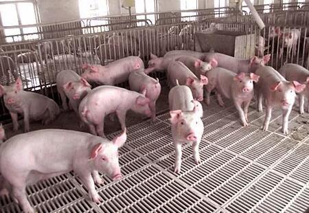 宁夏中宁县:30万头生猪养殖产业园项目有序推进