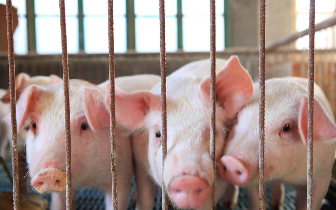 六部门联合发文促生产,防止生猪和猪肉价格大起大落