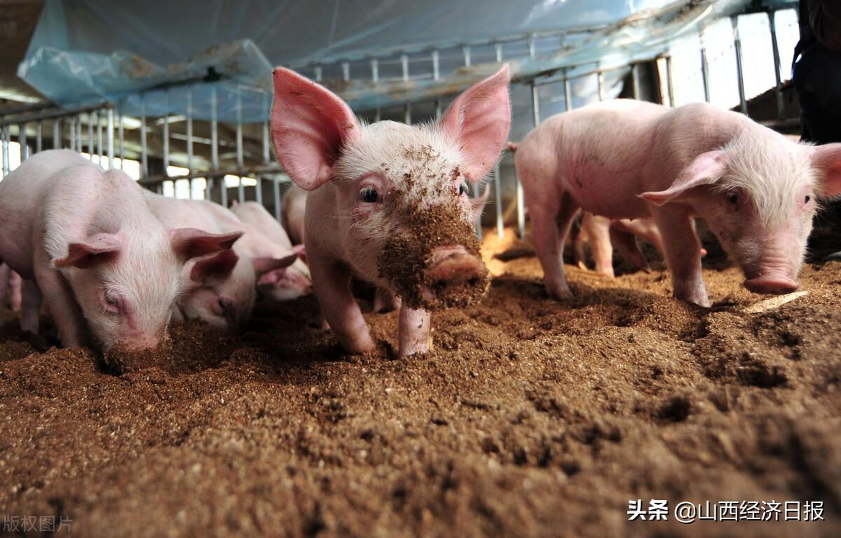 山西:上半年生猪出栏价格下跌,饲养收益大幅减少