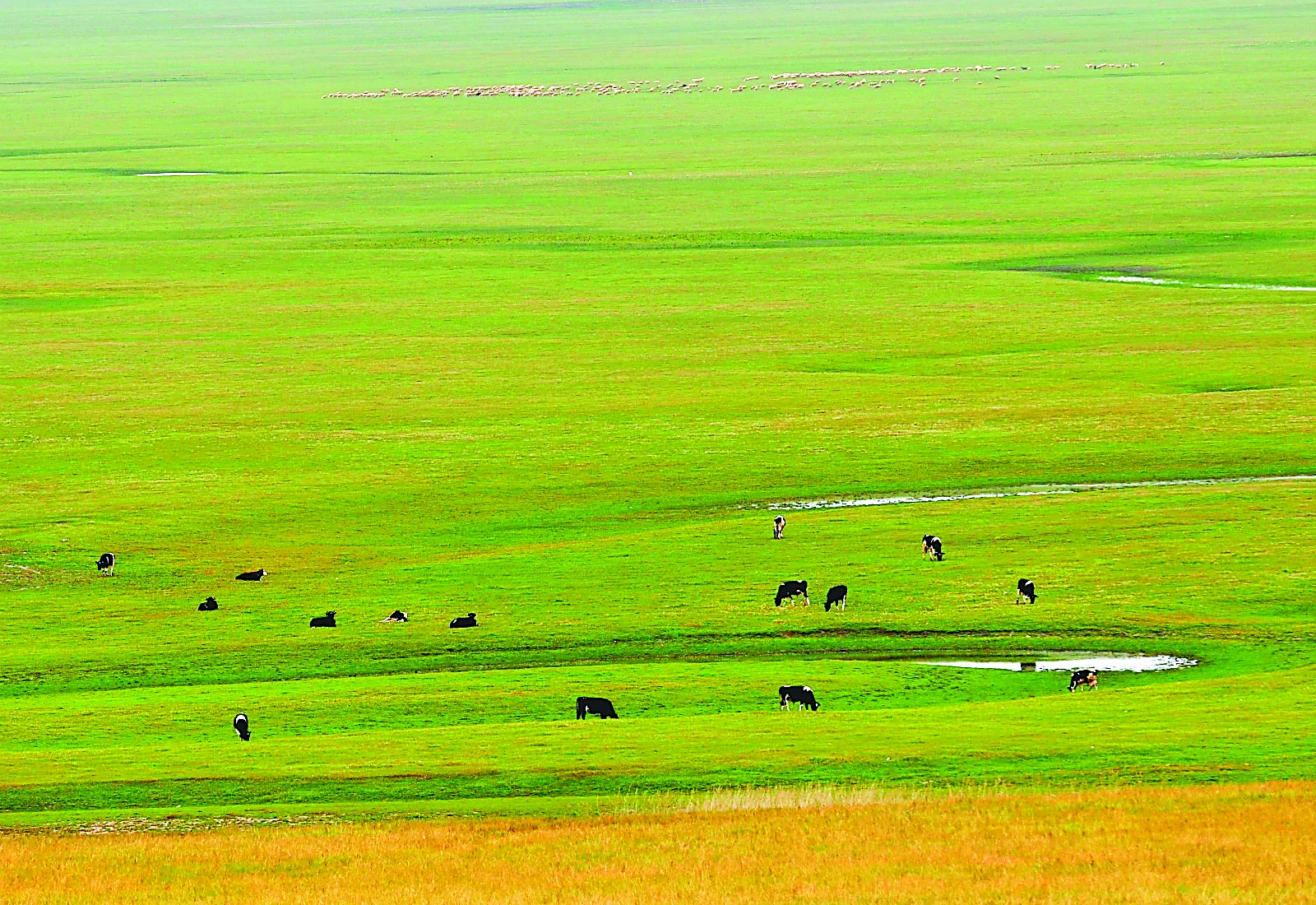 四川省发布促进畜牧业高质量发展若干措施征求意见稿
