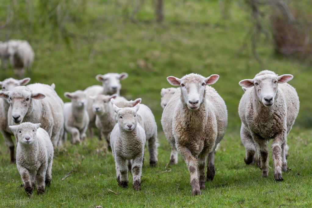"""牛羊肉低迷,猪肉行情一直偏低,鱼肉遭遇重压,""""火箭蛋""""一路飙升涨过猪肉?"""