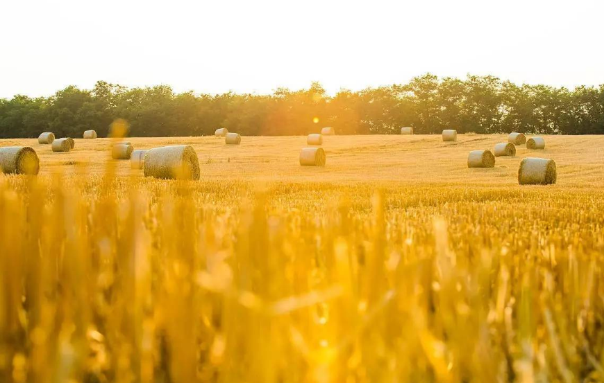 生产平菇后的菌糠营养成分含量比其培养料的营养成分含量高