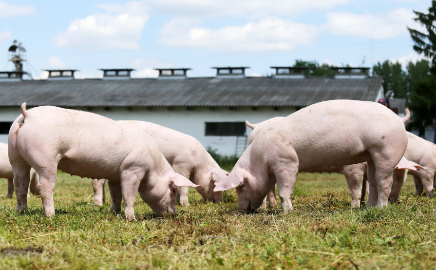 湖南生猪存栏3952.1万头产能基本恢复,提前半年完成中央下达的稳产保供目标