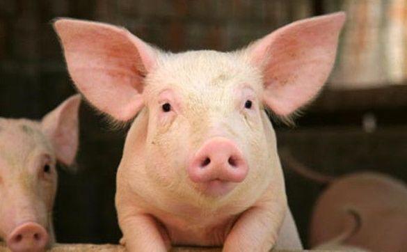 上半年福州市生猪存栏109.83万头同比增长62.4%,出栏97.2万头同比增长49.3%