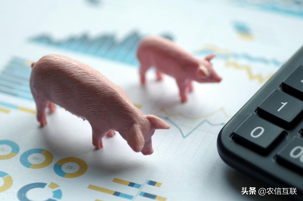 如今疫情严重,17省份确诊新冠,多地管控趋严,猪价承压!中秋前猪价能否上涨?