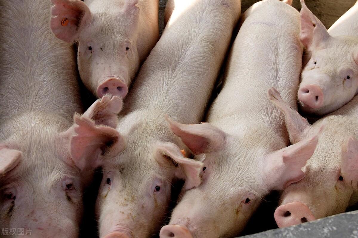 仔猪成本降至冰点,生猪价格将步入震荡上升通道,养殖利润回到合理区间