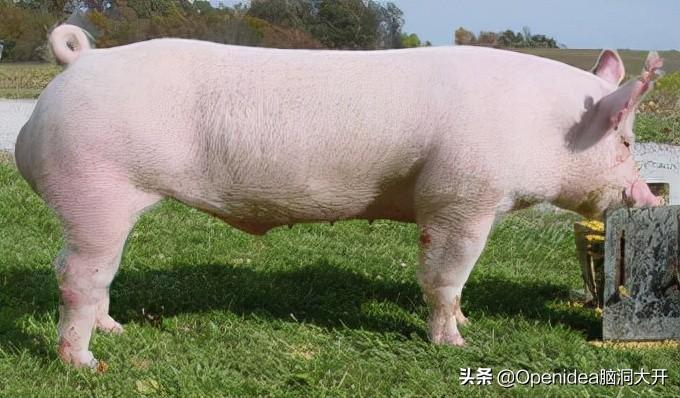 2021年灾情不断,灾情和疫情是否会对养猪这个行业有所影响呢?