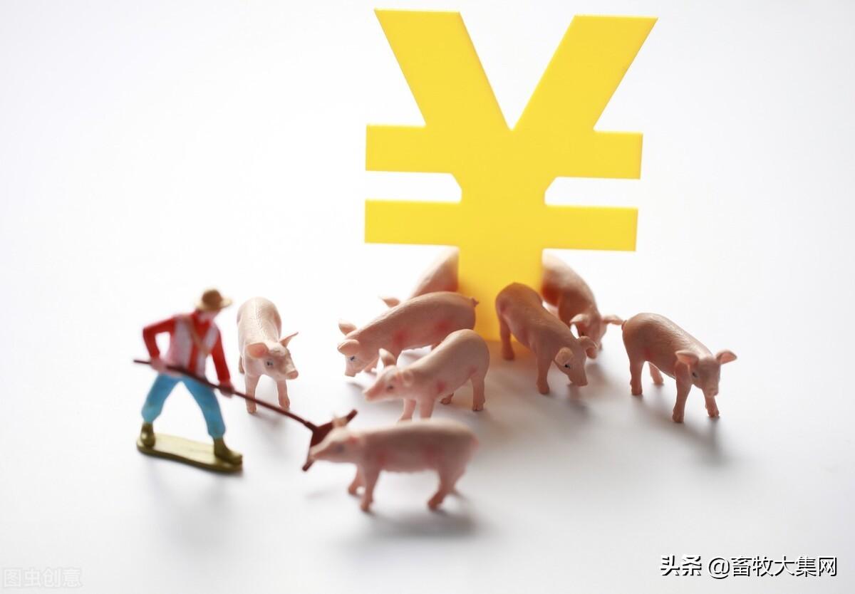 今日北方主产区猪价继续全面回落,东北猪价全面跌破14元/公斤