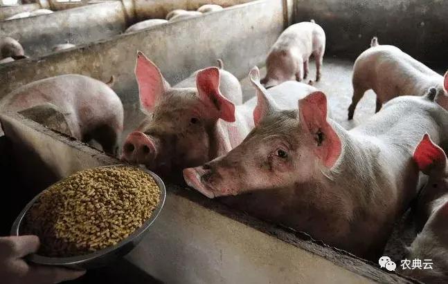完善生猪产能逆周期、跨周期调控机制!尽快推动43%左右的小散养殖户融入农业现代化进程