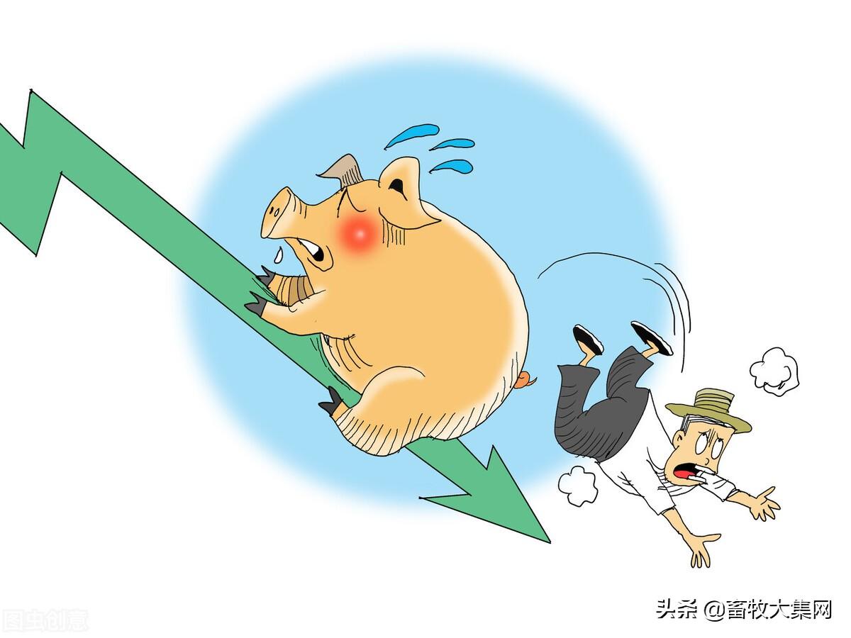 今日全国主要地区生猪出栏价格大部下跌,猪价继续阴跌生猪期货跳水不止