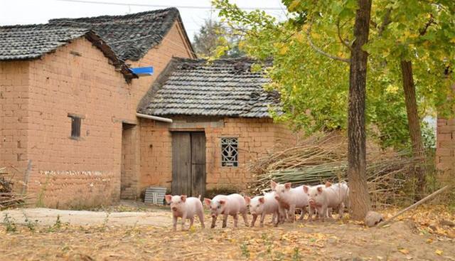 永寿县对违规养猪场进行拆除,粪污进行收集清运、无害化处理后还田利用