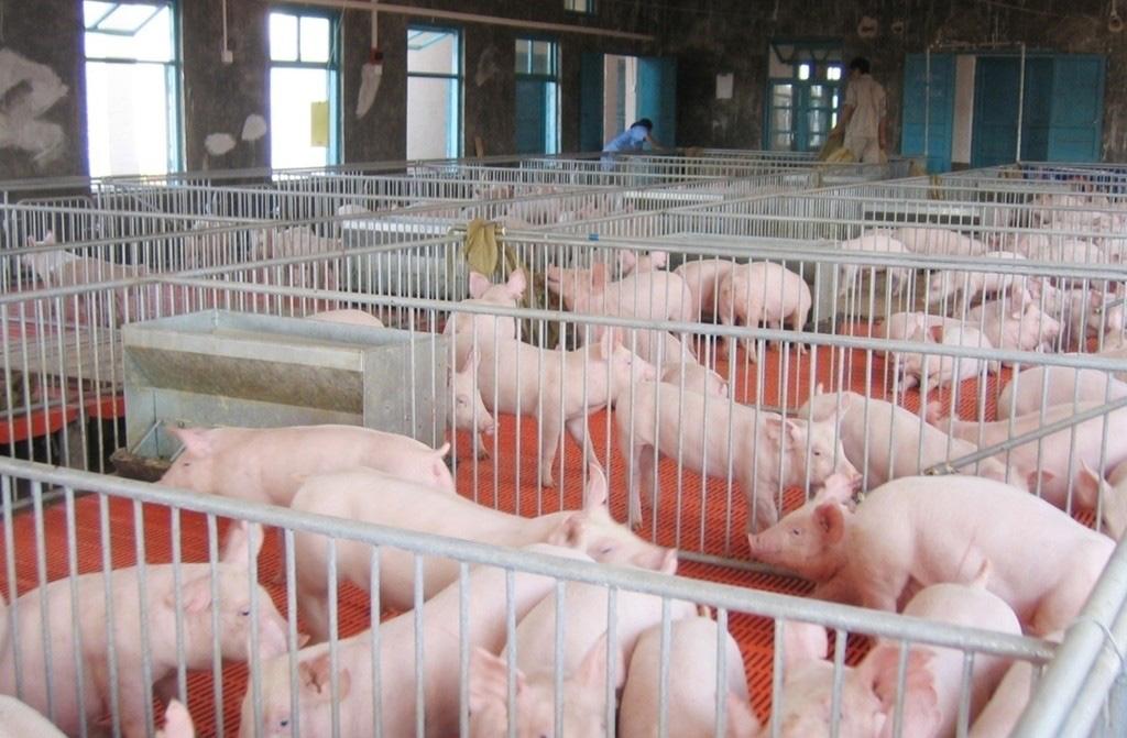 宁波江北区投资超亿元现代化养猪场建成,将于9月正式投用