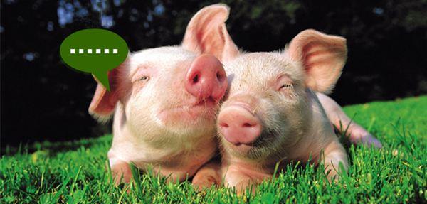 """9月猪价能涨多少呢?业内人士认为,9月猪价能否顺利上涨,关键看""""这5点"""""""